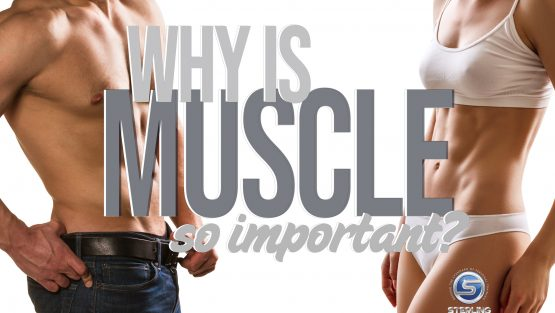 Why is muscle so important