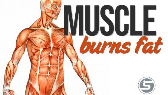 Muscle Burns Fat